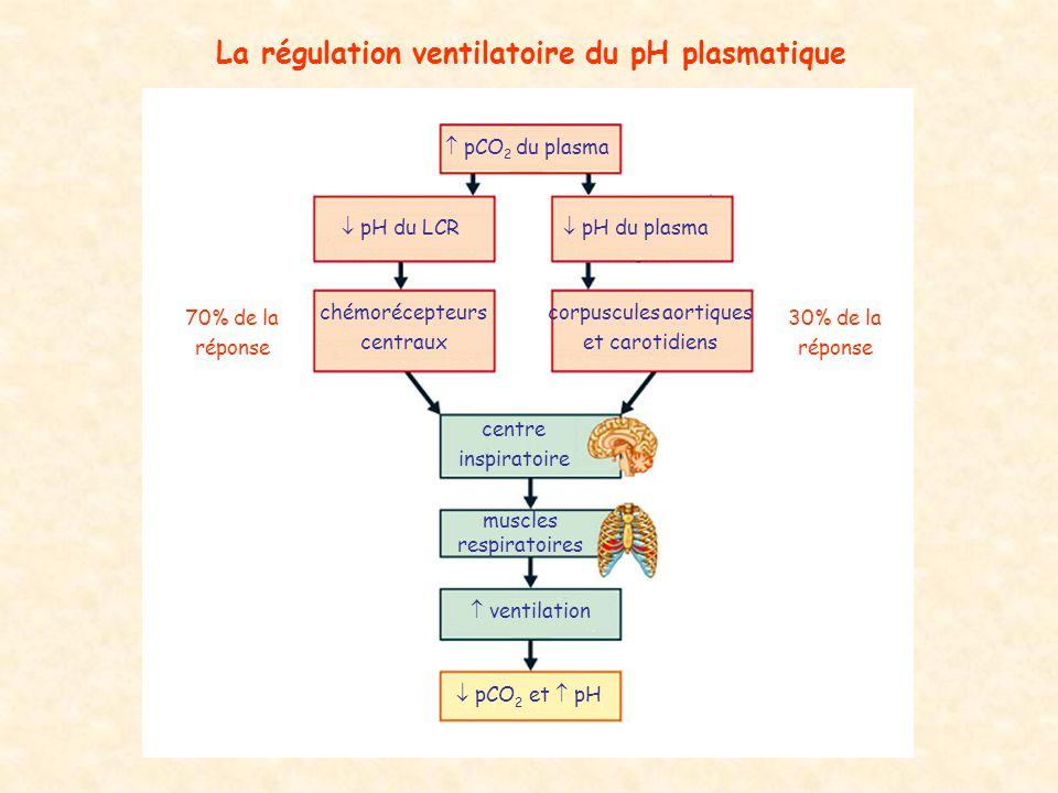  pCO 2 du plasma  pH du LCR  pH du plasma chémorécepteurs centraux corpuscules aortiques et carotidiens centre inspiratoire muscles respiratoires 
