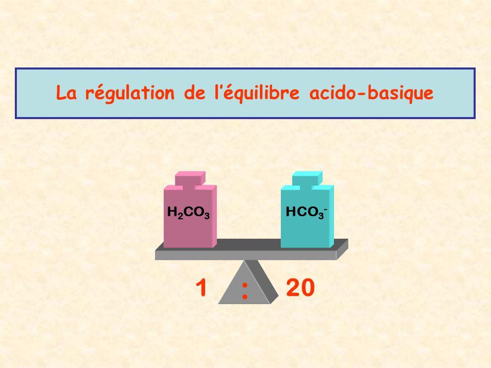 La régulation de l'équilibre acido-basique H 2 CO 3 HCO 3 - 120 :