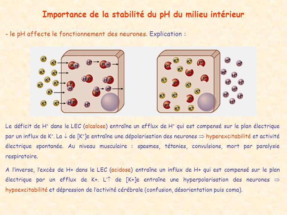 Importance de la stabilité du pH du milieu intérieur - le pH affecte le fonctionnement des neurones. Explication : Le déficit de H + dans le LEC (alca