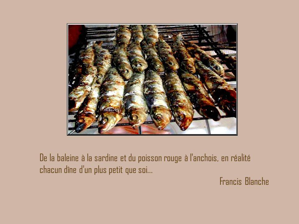 De la baleine à la sardine et du poisson rouge à l'anchois, en réalité chacun dîne d'un plus petit que soi... Francis Blanche