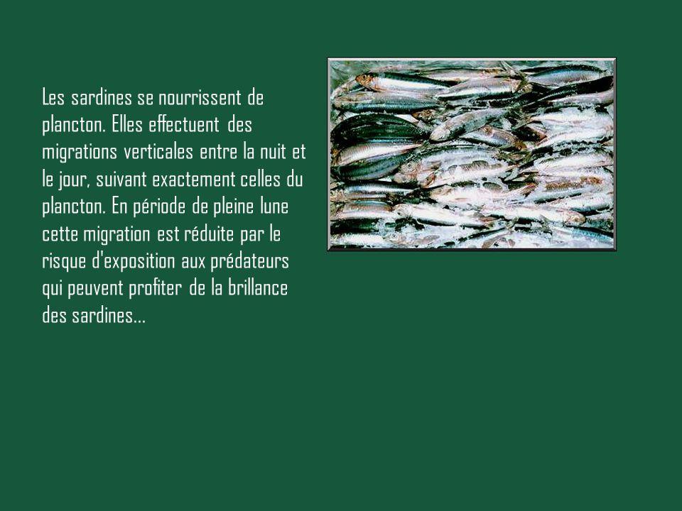 Les sardines se nourrissent de plancton. Elles effectuent des migrations verticales entre la nuit et le jour, suivant exactement celles du plancton. E