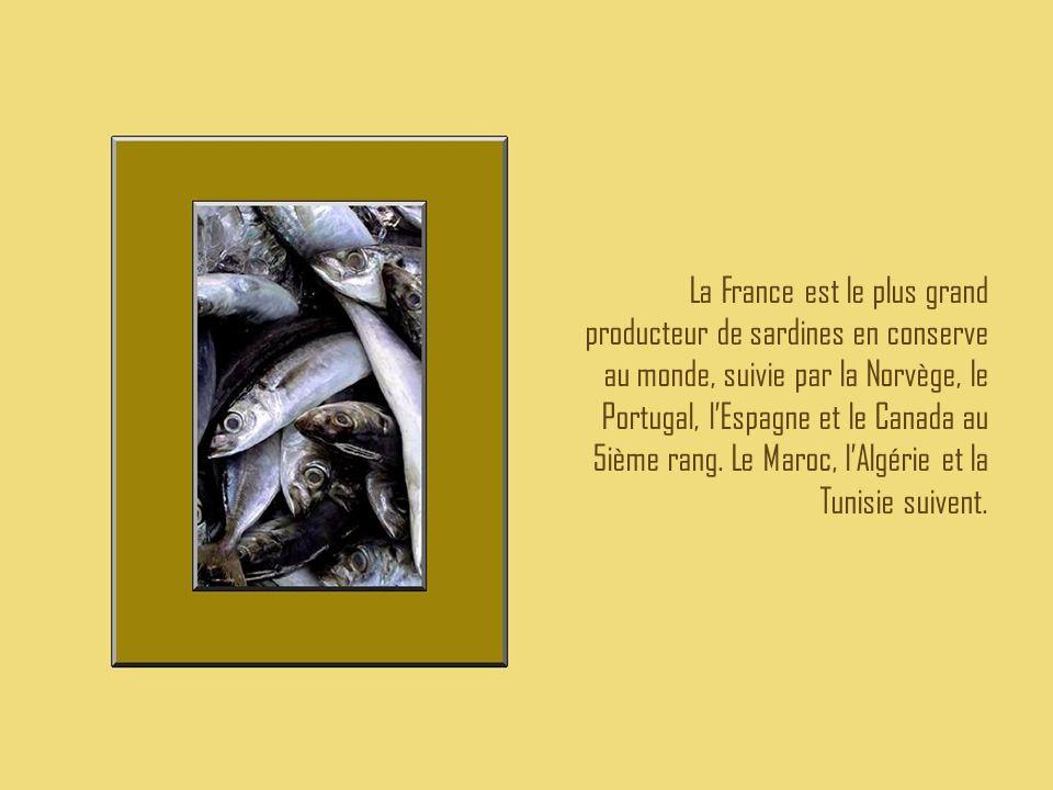 La France est le plus grand producteur de sardines en conserve au monde, suivie par la Norvège, le Portugal, l'Espagne et le Canada au 5ième rang. Le