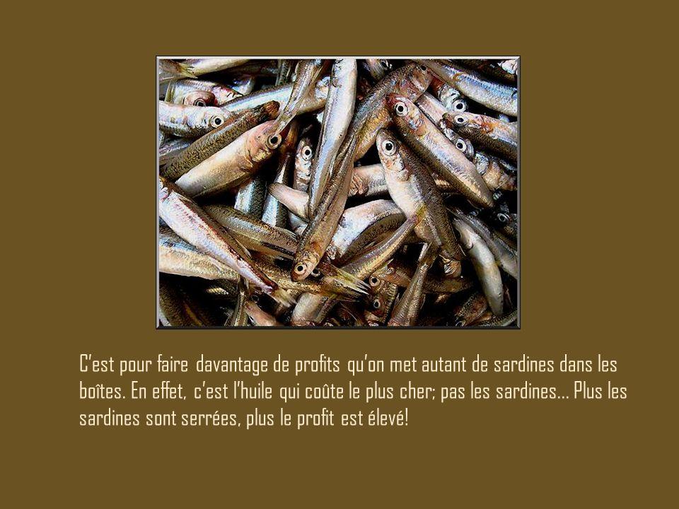 C'est pour faire davantage de profits qu'on met autant de sardines dans les boîtes. En effet, c'est l'huile qui coûte le plus cher; pas les sardines..