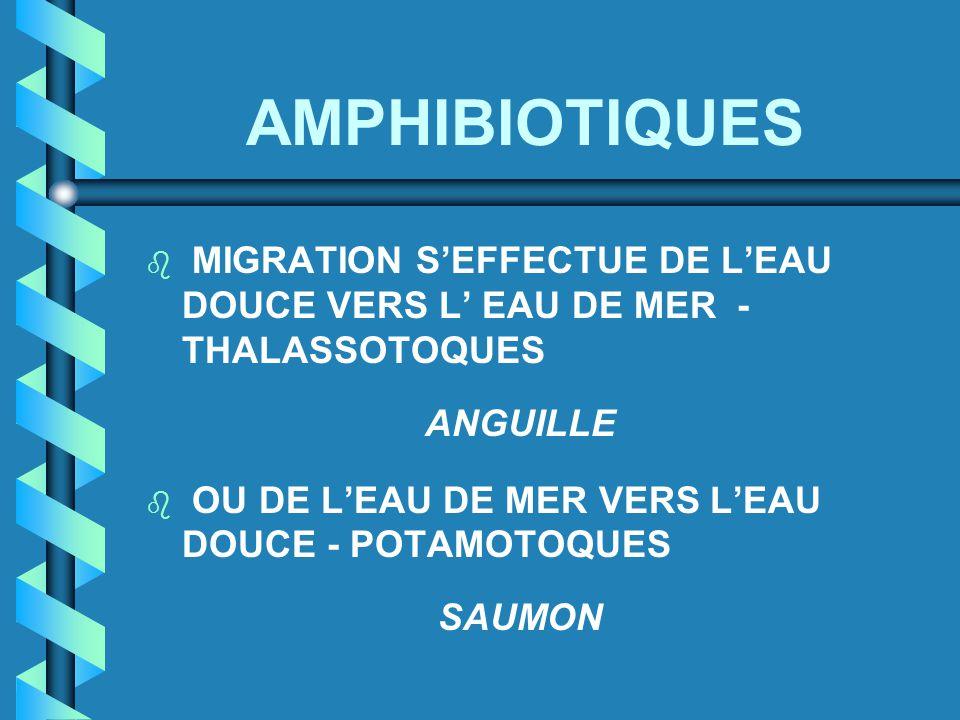 AMPHIBIOTIQUES b MIGRATION S'EFFECTUE DE L'EAU DOUCE VERS L' EAU DE MER - THALASSOTOQUES ANGUILLE b OU DE L'EAU DE MER VERS L'EAU DOUCE - POTAMOTOQUES