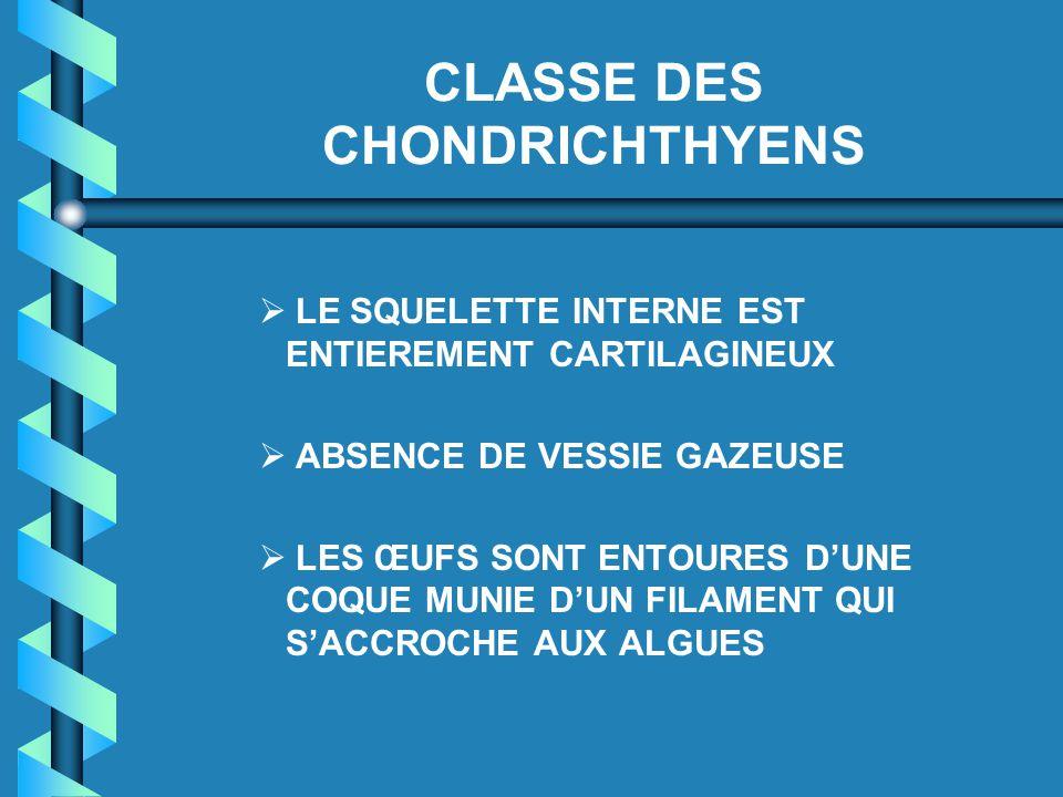 CLASSE DES CHONDRICHTHYENS   LE SQUELETTE INTERNE EST ENTIEREMENT CARTILAGINEUX   ABSENCE DE VESSIE GAZEUSE   LES ŒUFS SONT ENTOURES D'UNE COQUE