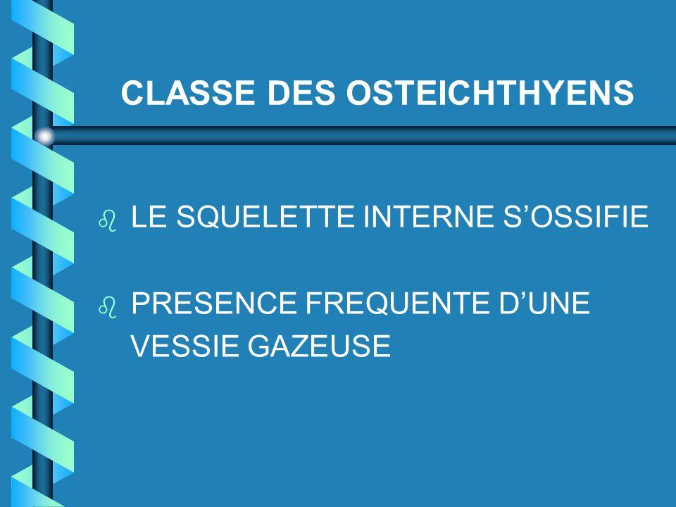 CLASSE DES OSTEICHTHYENS b b LE SQUELETTE INTERNE S'OSSIFIE b b PRESENCE FREQUENTE D'UNE VESSIE GAZEUSE