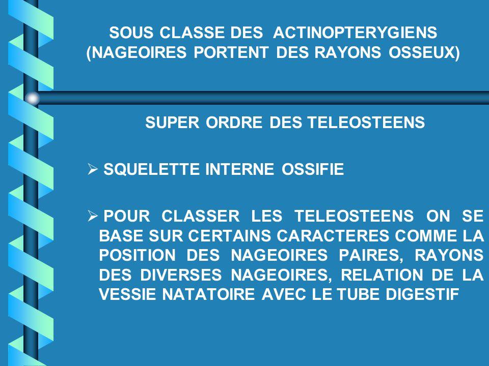 SOUS CLASSE DES ACTINOPTERYGIENS (NAGEOIRES PORTENT DES RAYONS OSSEUX) SUPER ORDRE DES TELEOSTEENS   SQUELETTE INTERNE OSSIFIE   POUR CLASSER LES