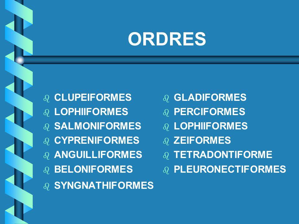 ORDRES b b CLUPEIFORMES b b LOPHIIFORMES b b SALMONIFORMES b b CYPRENIFORMES b b ANGUILLIFORMES b b BELONIFORMES b b SYNGNATHIFORMES b GLADIFORMES b P