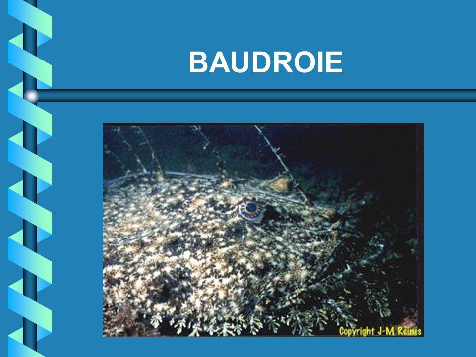 BAUDROIE