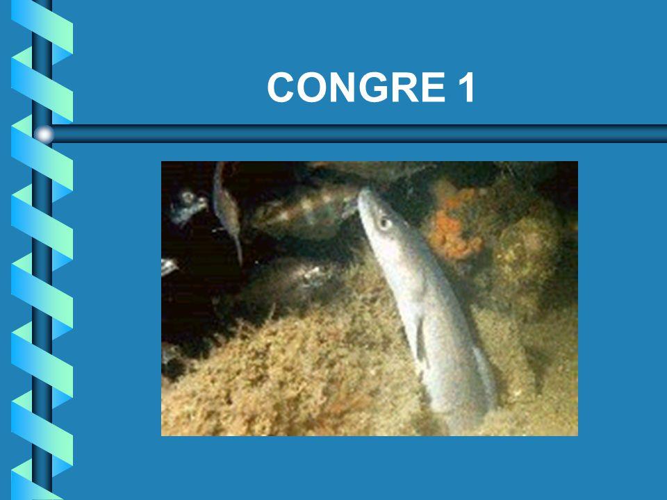CONGRE 1