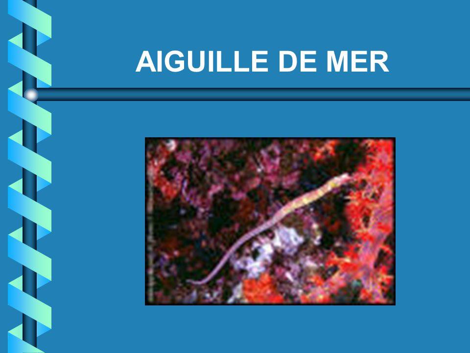 AIGUILLE DE MER