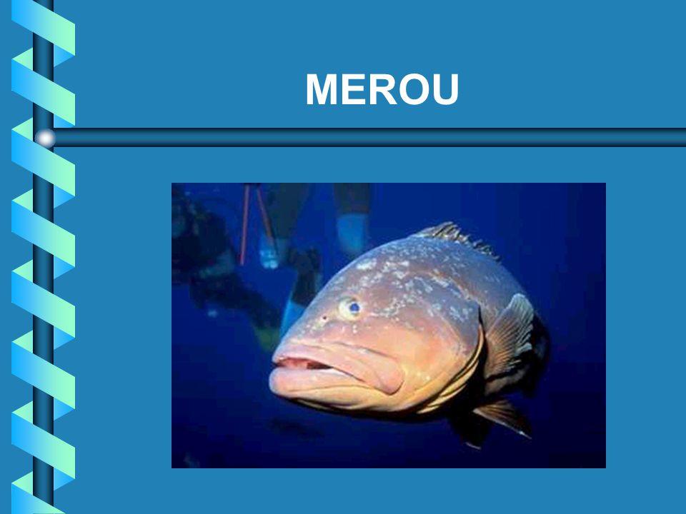 MEROU