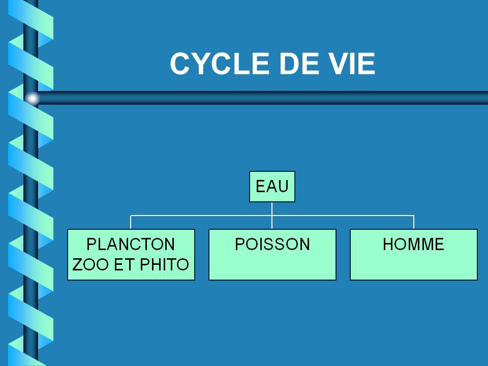 CYCLE DE VIE