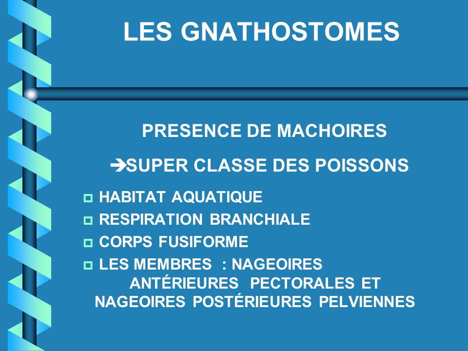 LES GNATHOSTOMES PRESENCE DE MACHOIRES è SUPER CLASSE DES POISSONS p HABITAT AQUATIQUE p RESPIRATION BRANCHIALE p CORPS FUSIFORME p LES MEMBRES : NAGE