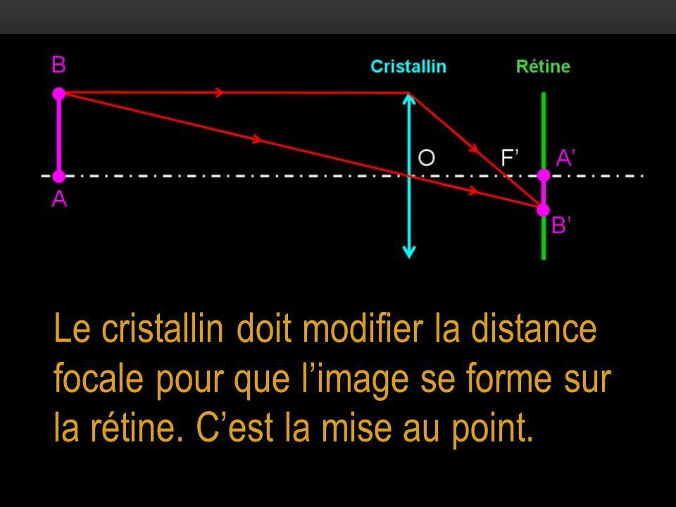 Le cristallin doit modifier la distance focale pour que l'image se forme sur la rétine. C'est la mise au point.
