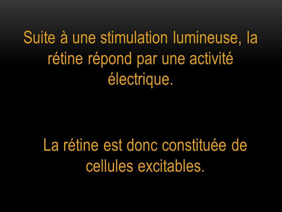 Suite à une stimulation lumineuse, la rétine répond par une activité électrique. La rétine est donc constituée de cellules excitables.