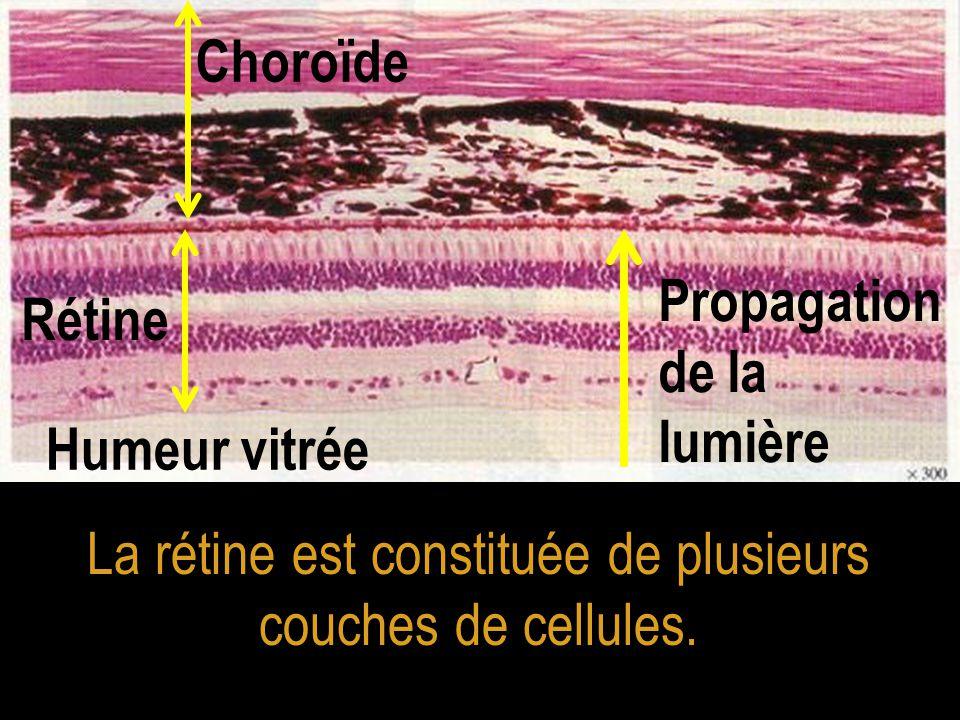 La rétine est constituée de plusieurs couches de cellules. Choroïde Rétine Humeur vitrée Propagation de la lumière