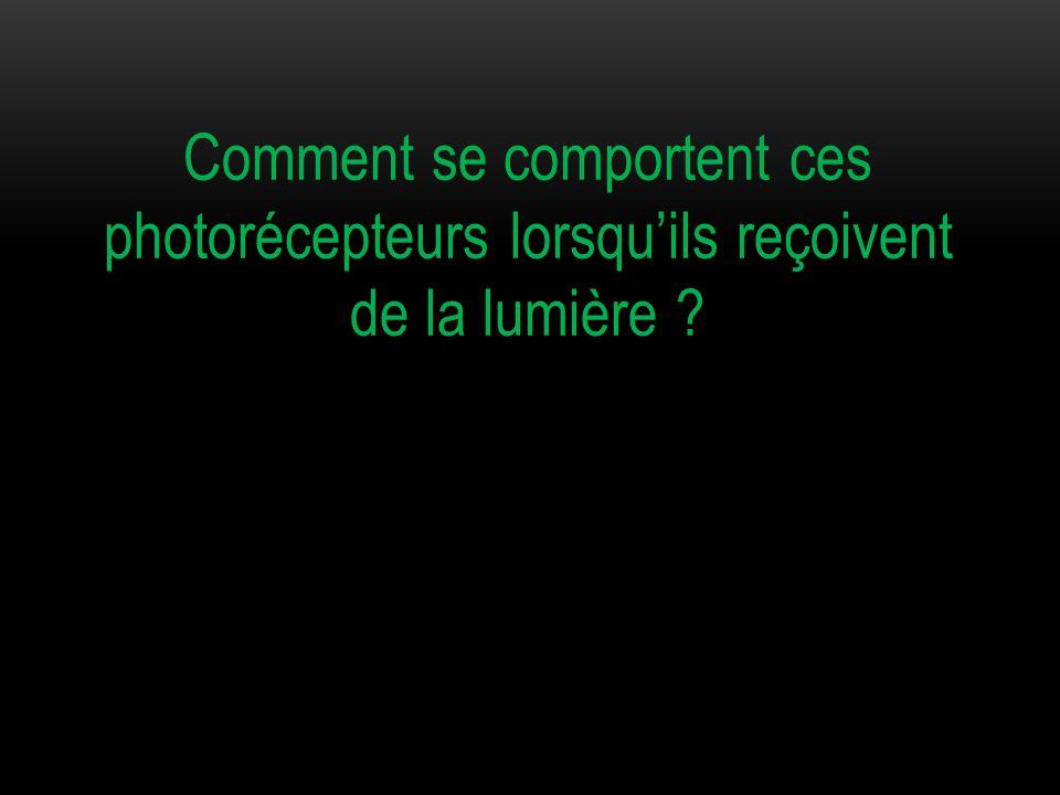 Comment se comportent ces photorécepteurs lorsqu'ils reçoivent de la lumière ?