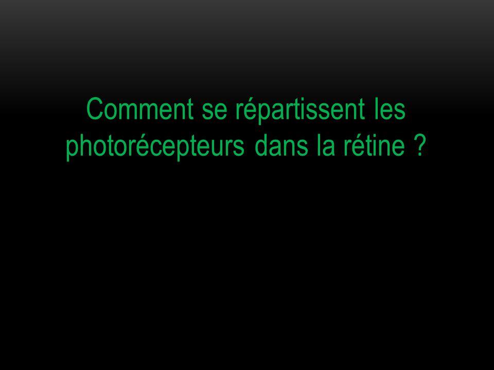 Comment se répartissent les photorécepteurs dans la rétine ?