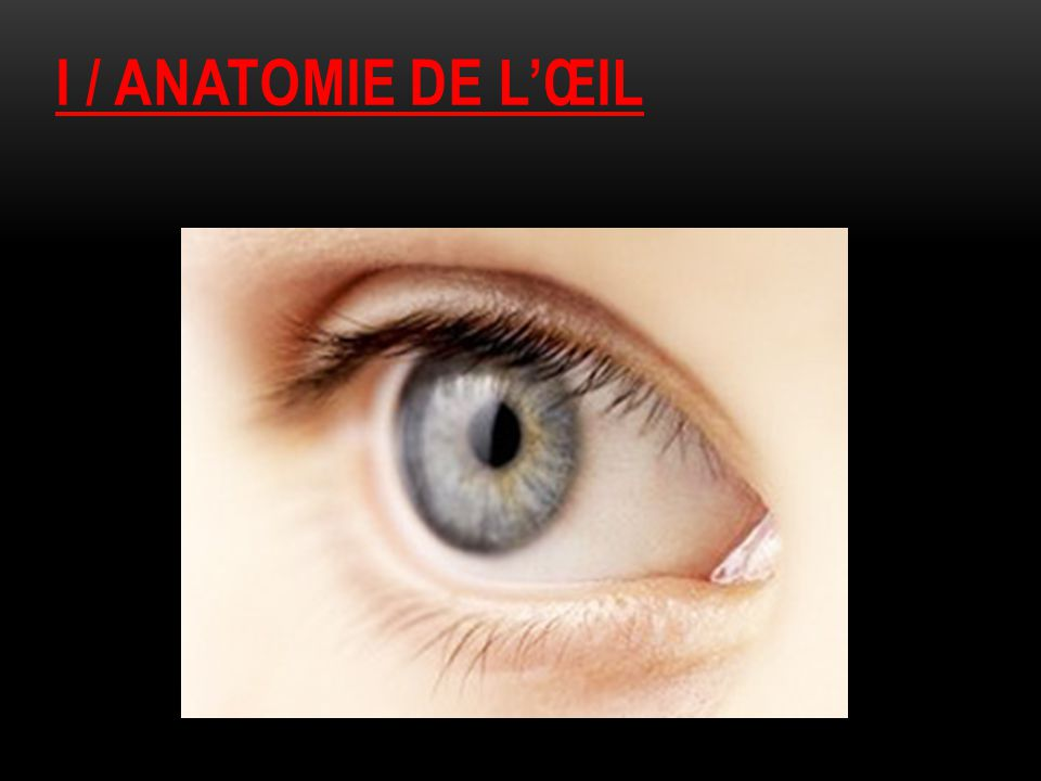 I / ANATOMIE DE L'ŒIL