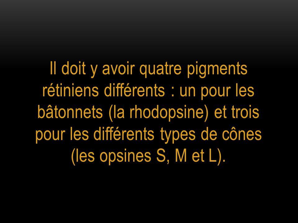 Il doit y avoir quatre pigments rétiniens différents : un pour les bâtonnets (la rhodopsine) et trois pour les différents types de cônes (les opsines