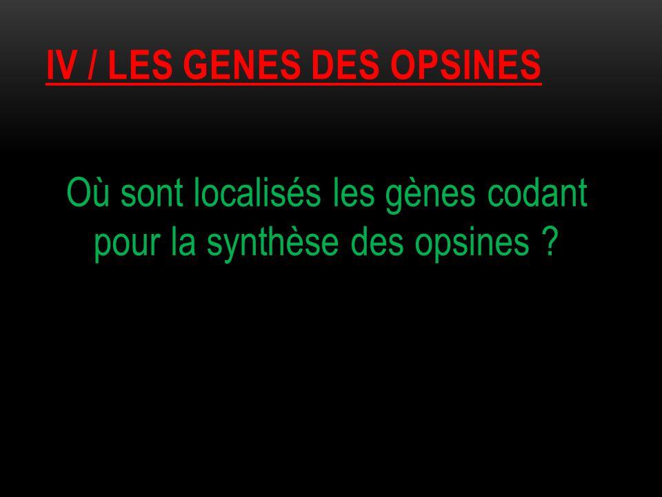IV / LES GENES DES OPSINES Où sont localisés les gènes codant pour la synthèse des opsines ?