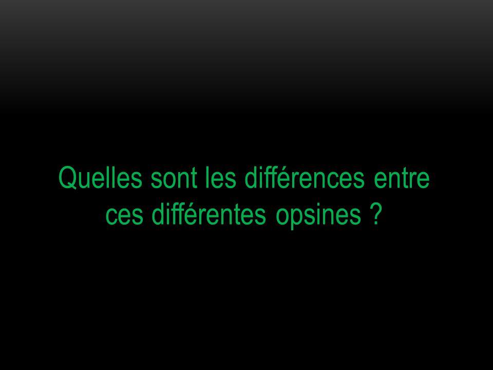 Quelles sont les différences entre ces différentes opsines ?