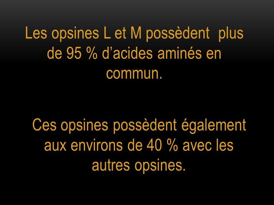 Les opsines L et M possèdent plus de 95 % d'acides aminés en commun. Ces opsines possèdent également aux environs de 40 % avec les autres opsines.