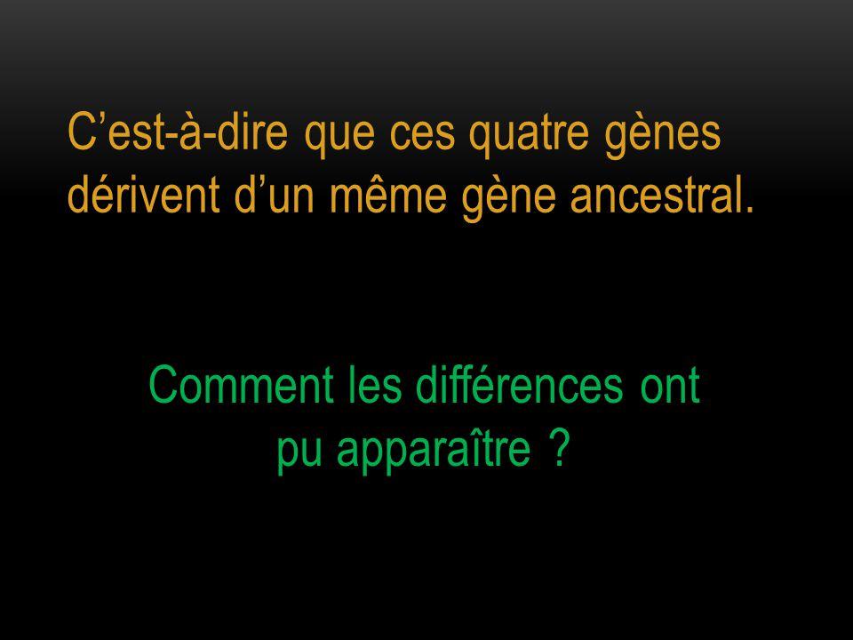 C'est-à-dire que ces quatre gènes dérivent d'un même gène ancestral. Comment les différences ont pu apparaître ?