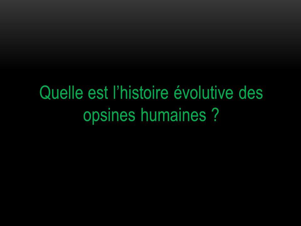 Quelle est l'histoire évolutive des opsines humaines ?