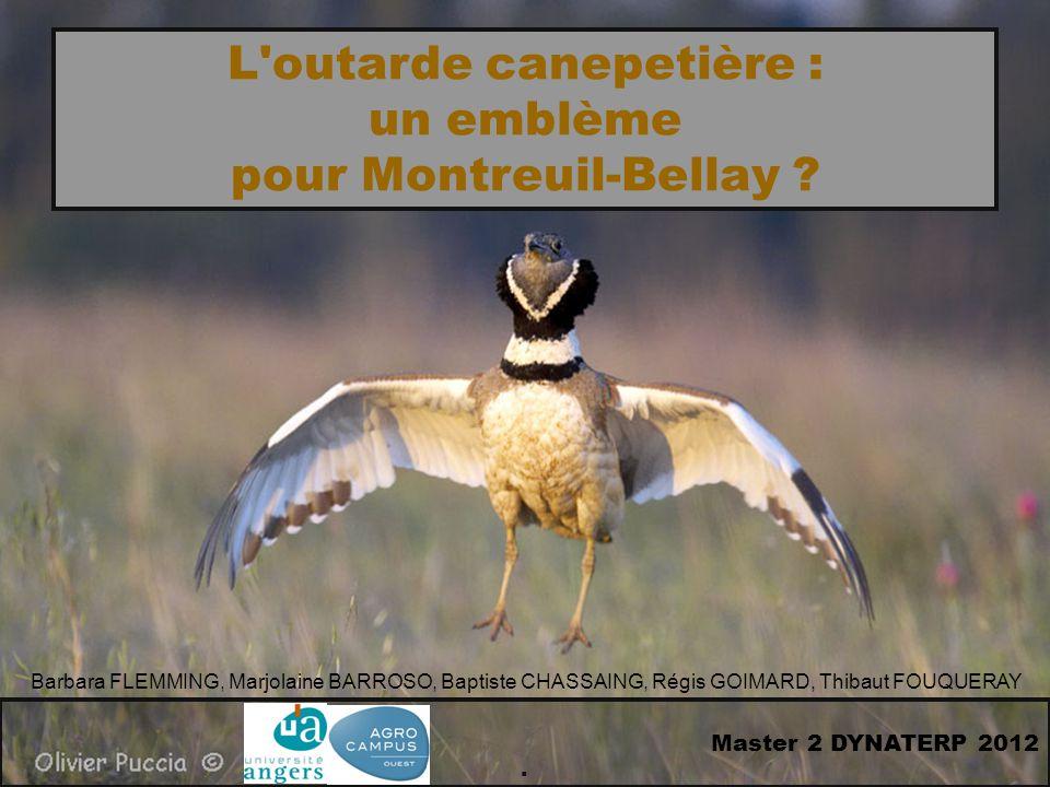 L outarde canepetière : un emblème pour Montreuil-Bellay .