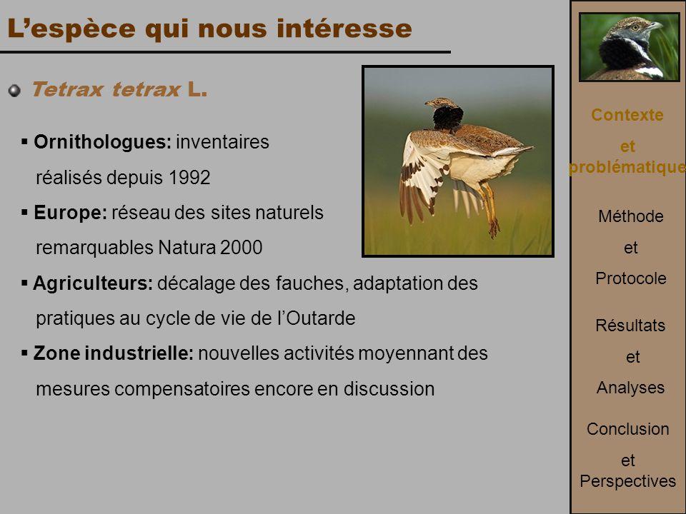 L'espèce qui nous intéresse Tetrax tetrax L.