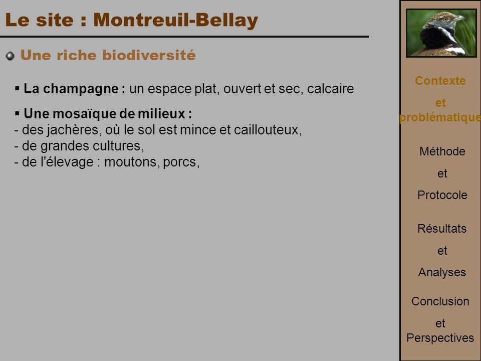 Le site : Montreuil-Bellay  La champagne : un espace plat, ouvert et sec, calcaire  Une mosaïque de milieux : - des jachères, où le sol est mince et caillouteux, - de grandes cultures, - de l élevage : moutons, porcs, Contexte et problématique Méthode et Protocole Conclusion et Perspectives Résultats et Analyses Une riche biodiversité