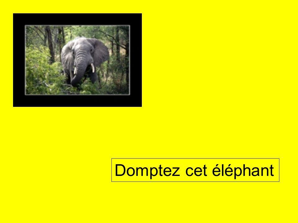 Domptez cet éléphant