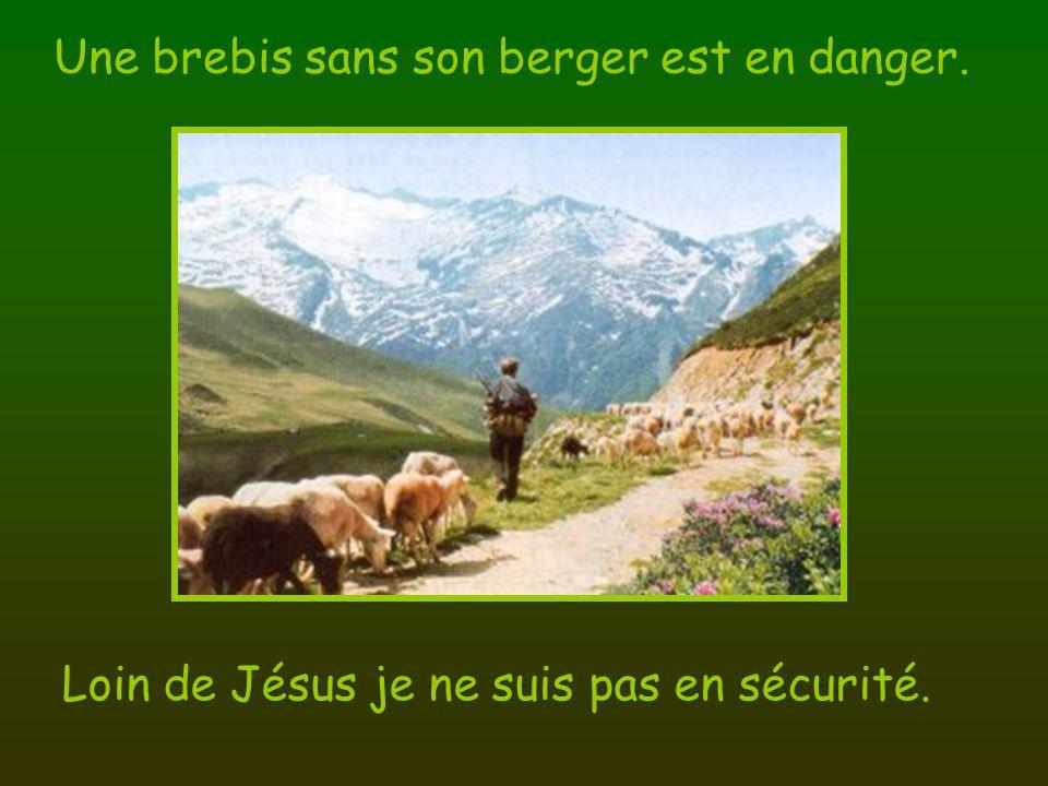Une brebis sans son berger est en danger. Loin de Jésus je ne suis pas en sécurité.