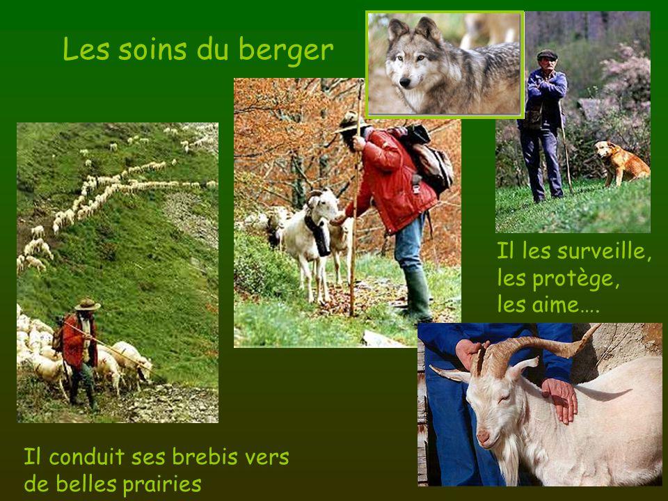 Les soins du berger Il conduit ses brebis vers de belles prairies Il les surveille, les protège, les aime….