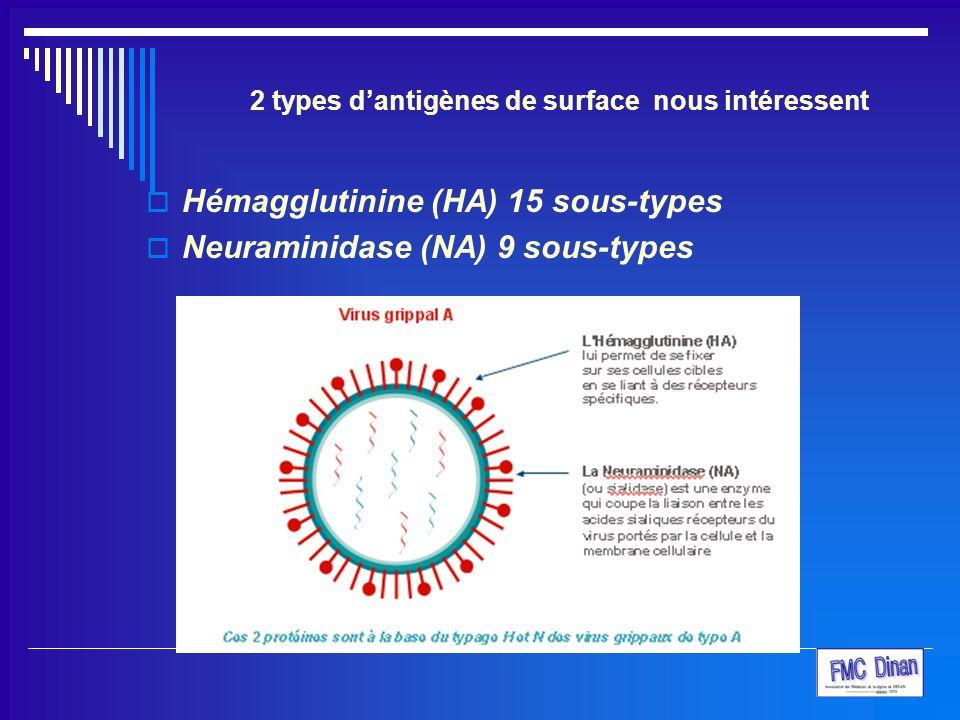 2 types d'antigènes de surface nous intéressent  Hémagglutinine (HA) 15 sous-types  Neuraminidase (NA) 9 sous-types