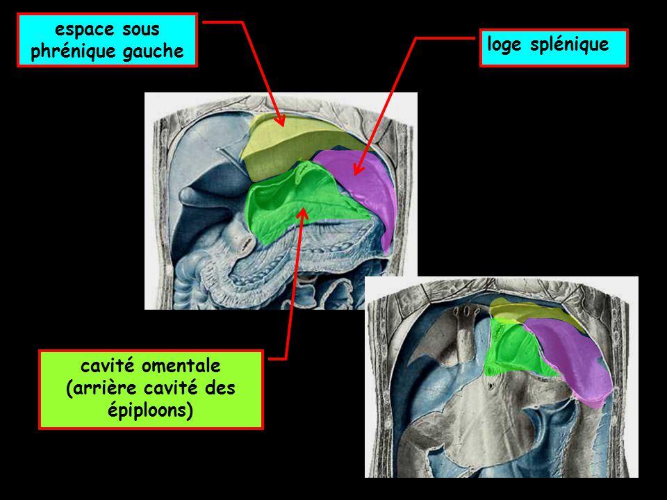 cavité omentale (arrière cavité des épiploons) espace sous phrénique gauche loge splénique