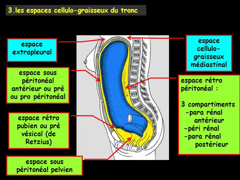 espace sous péritonéal antérieur ou pré ou pro péritonéal espace rétro pubien ou pré vésical (de Retzius) espace sous péritonéal pelvien espace rétro