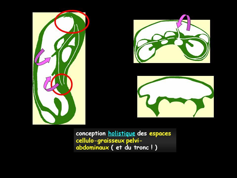 holistique conception holistique des espaces cellulo-graisseux pelvi- abdominaux ( et du tronc ! )