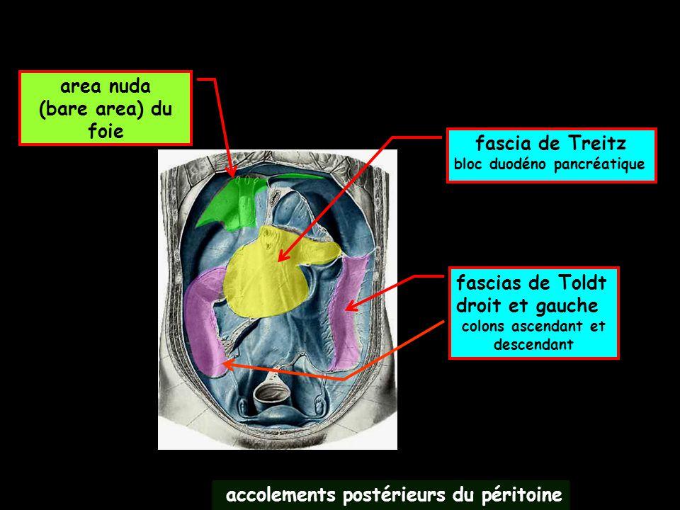accolements postérieurs du péritoine fascia de Treitz bloc duodéno pancréatique fascias de Toldt droit et gauche colons ascendant et descendant area n