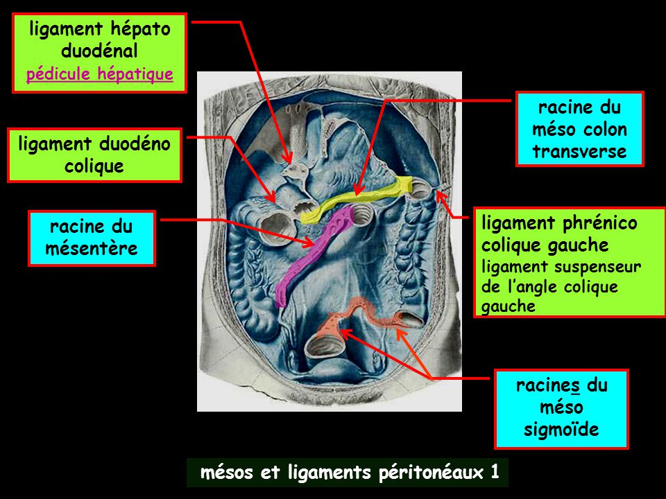 application pratique :les petits signes CT de péritonite diffuse péritoine pariétal grand omentumn MDCT avant injection)