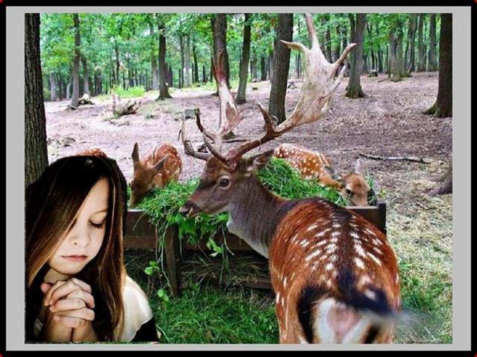 Mais que fait-elle dans les bois Elle prie
