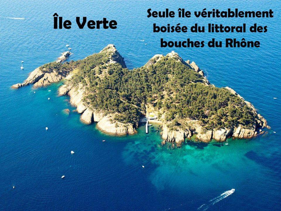 Île de Riou Île Calseraigne ``Île aux rats''