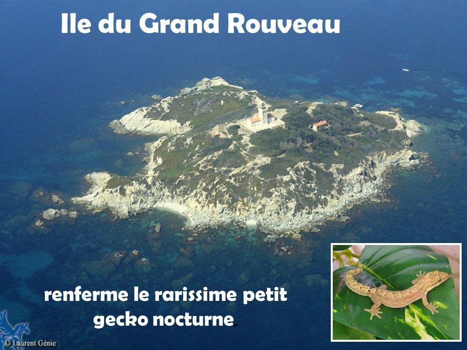 Île des Embiez Appartient aux héritiers de Paul Ricardn
