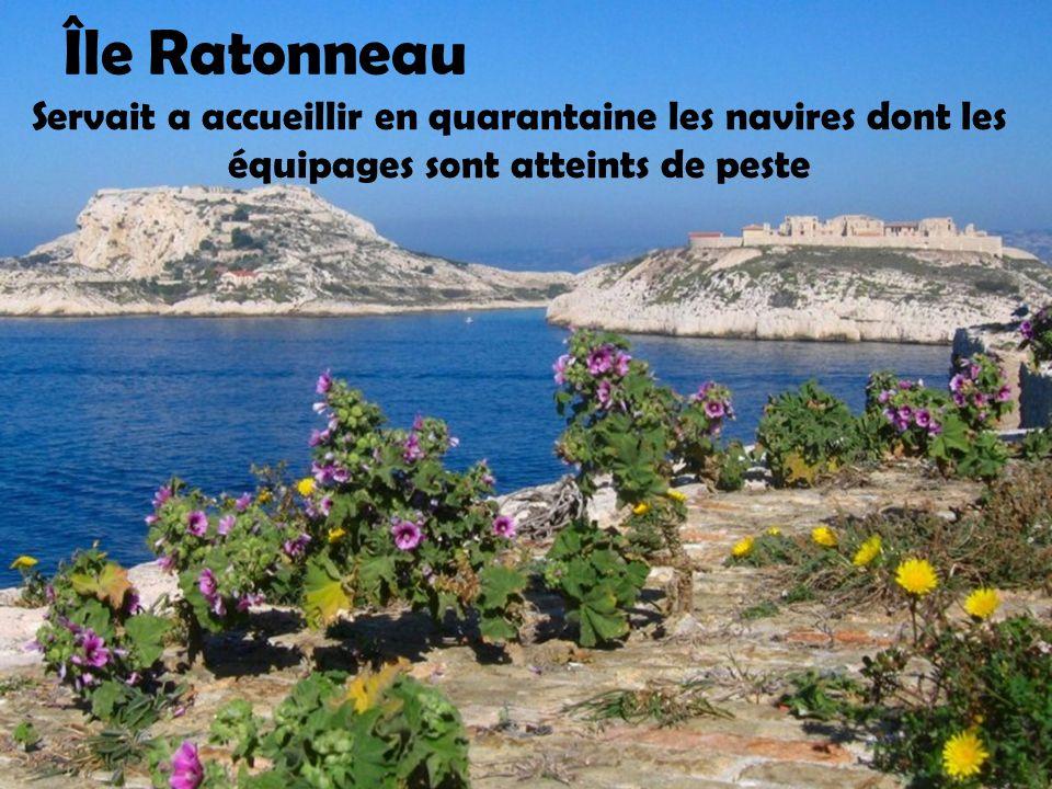 Île Saint Honorat Aujourd'hui, l'île est encore la propriété des moines
