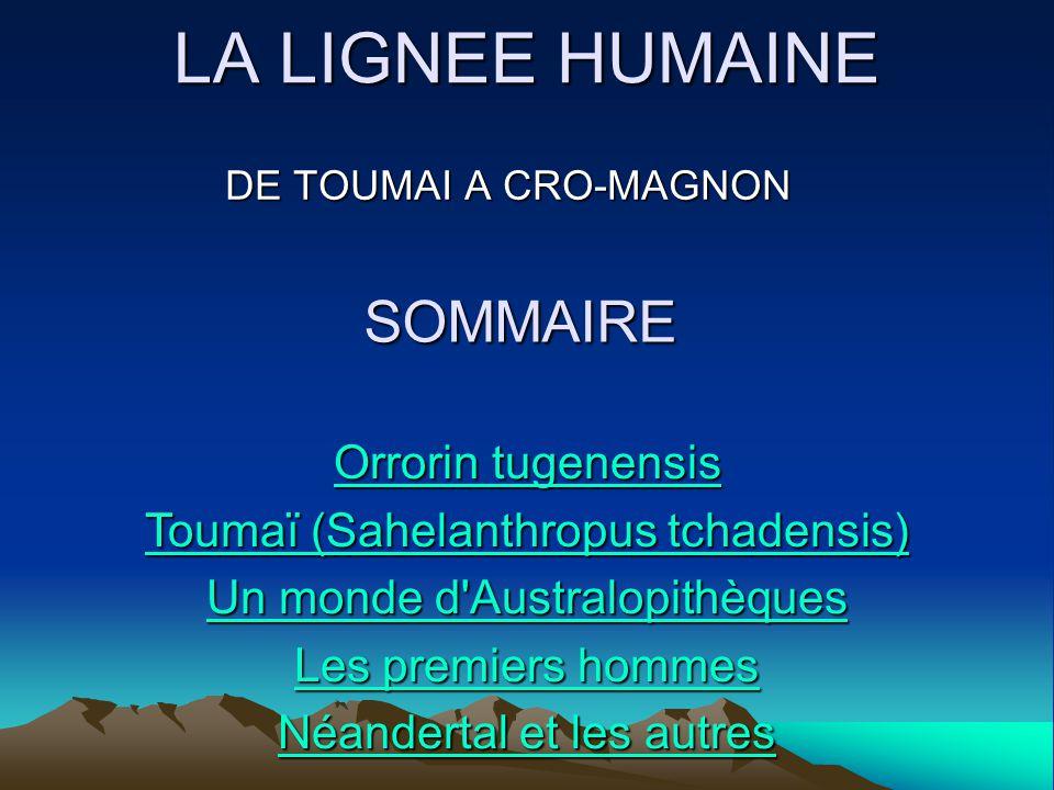 LA LIGNEE HUMAINE DE TOUMAI A CRO-MAGNON SOMMAIRE Orrorin tugenensis Orrorin tugenensis Toumaï (Sahelanthropus tchadensis) Toumaï (Sahelanthropus tcha