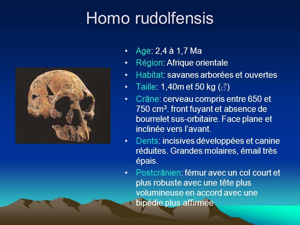 Homo rudolfensis Age: 2,4 à 1,7 Ma Région: Afrique orientale Habitat: savanes arborées et ouvertes Taille: 1,40m et 50 kg (♂) Crâne: cerveau compris e