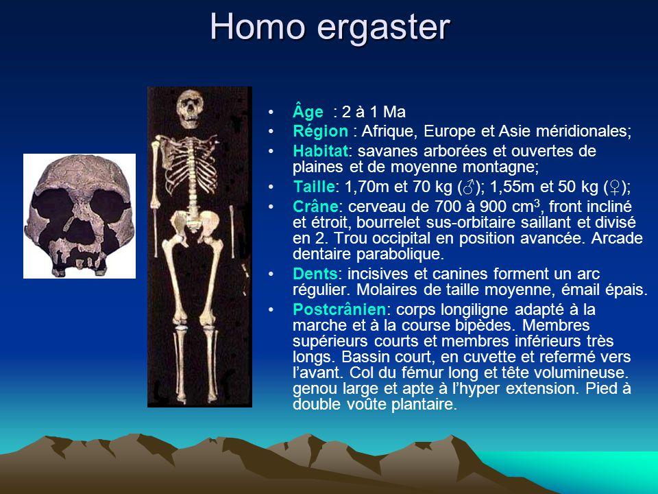 Homo ergaster Âge : 2 à 1 Ma Région : Afrique, Europe et Asie méridionales; Habitat: savanes arborées et ouvertes de plaines et de moyenne montagne; T