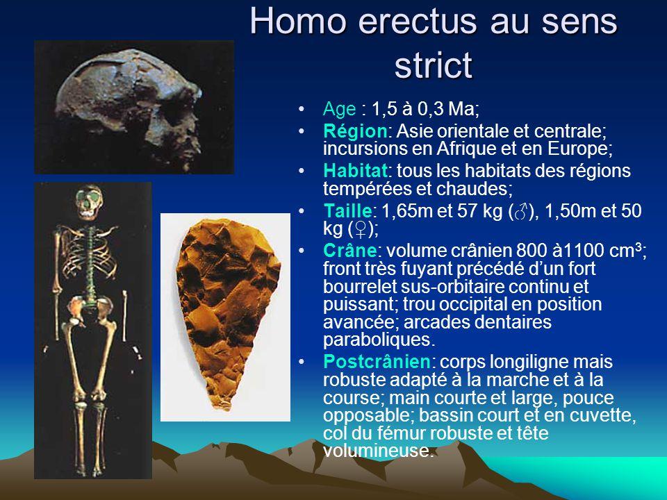 Homo erectus au sens strict Age : 1,5 à 0,3 Ma; Région: Asie orientale et centrale; incursions en Afrique et en Europe; Habitat: tous les habitats des